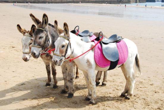 Riding the Donkeys