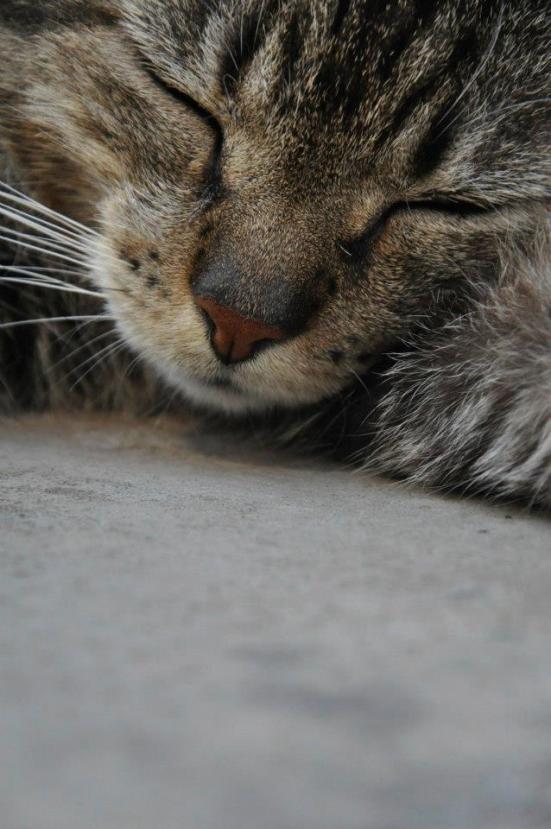 Recoleta Cat