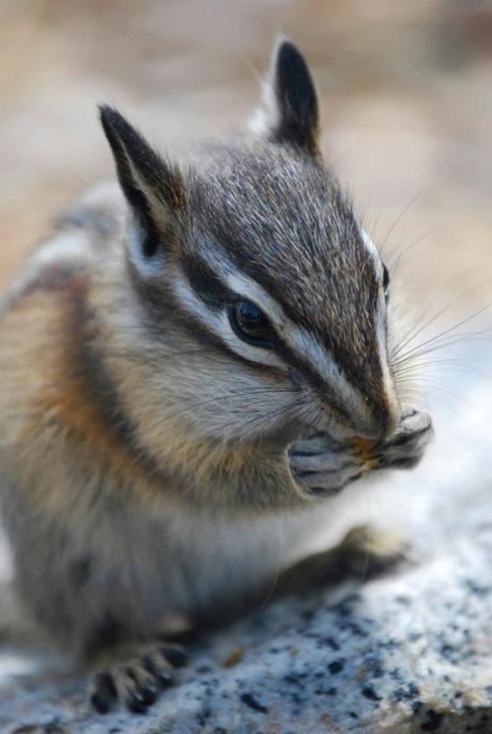 Just Cute!